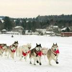 Barking Brook Sled Dog Adventures - Day Trips-billede