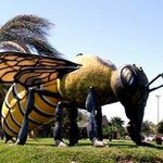 World's Largest Killer Bee