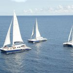Carnival Sailing Party Cruises