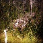 Murrindindi Scenic Reserve