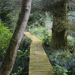 Boardwalk on one of the trails