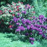 Hulda Klager Lilac Gardens Resmi