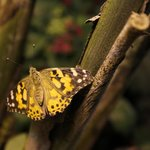 Butterflies at the Bridge