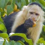 Gamboa Rainforest Resort Night Safari