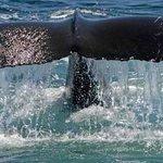 SeaSalt Charters Photo