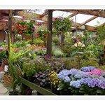 Photo of Valleyside Garden Centre Cafe