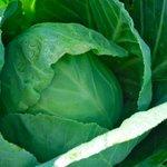 Half Hippie U-Pick Produce Farm