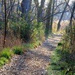 Teaneck Creek Conservancy