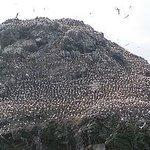 Foto de Réserve Naturelle des Sept Îles
