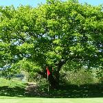 Kenmare Golf Club Picture