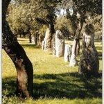 Parco Archeologico di Pranu Muttedu