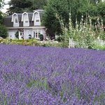 Lavender Hollow Farm