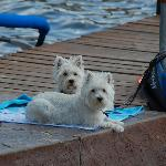 Dogs liked the dock action, too.