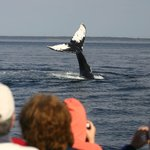 Pirate's Cove Whale & Seabird Cruises
