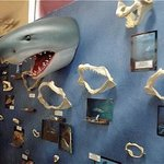 Whale, Sea Life and Shark Museum