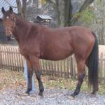 My Saddle Brook Farm Image