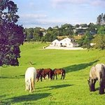 Muckross Stables and Petfarm Foto