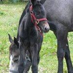 Foto de Skippers Equestrian Center