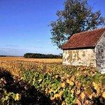 Loire Valley Wine Tour - Day Tours