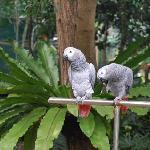 bohol botanika tarsier