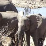 Elephants at water hole- view from dining area