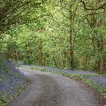 local walks through bluebell woods