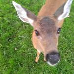The deer are very friendly