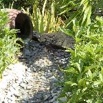 In the Garden - leads to the little turtle pool