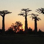 sunset at Baobab Avenue