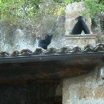 ...il gatto sul tetto...
