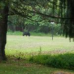 Black Bear (as seen from the main road to campground)