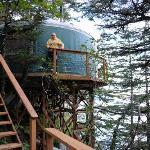 Stellar Jay cabin