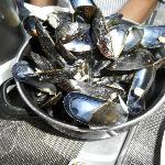 Mussels in Brussels
