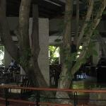 Tree growing right through the lobby