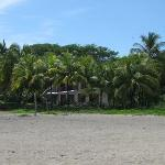 Palms in front of a private residence on the beach