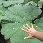 Giant Plants