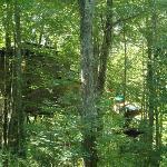 A TRUE Tree House