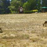 deer grazing near the pool