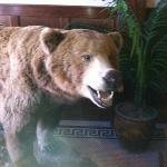 Bear in the hotel lobby