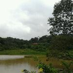 A small lake in front of the cottages..