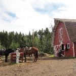 Barn area.