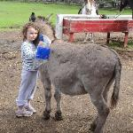 Barn area, very friendly donkeys
