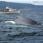 Obserwacja delfinów i wielorybów