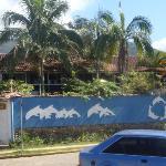Golfinho Tropical Foto
