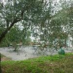 صورة فوتوغرافية لـ La Locanda Cuccuini