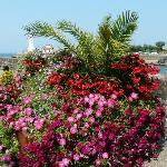 Le bel fleurissement de ciboure