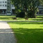 Im Tiergarten, im Hintergrund das Hotel