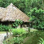 Main lodge surrounded by jungle