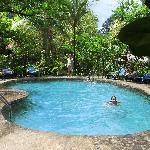 Chlorine-free pool fed from a jungle stream