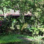 Cabin hidden in a tropical garden